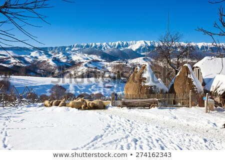 typical winter scenic view from bran castle surroundings stock photo © pixachi