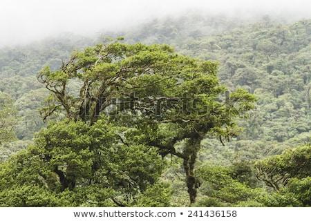 Esőerdő Rio völgy park Costa Rica természet Stock fotó © meinzahn