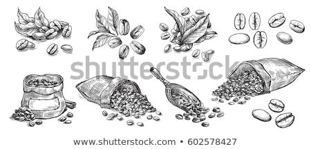 Kávébab vektor illusztrációk kávézó fekete sötét Stock fotó © doddis