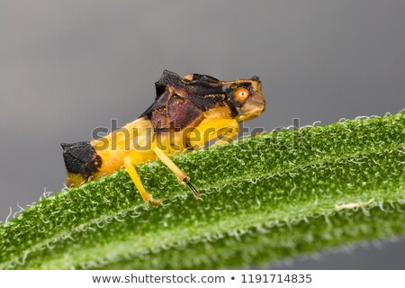 Ambush Bug On A Leaf Stock photo © brm1949