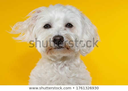Stock photo: Serious looking dog