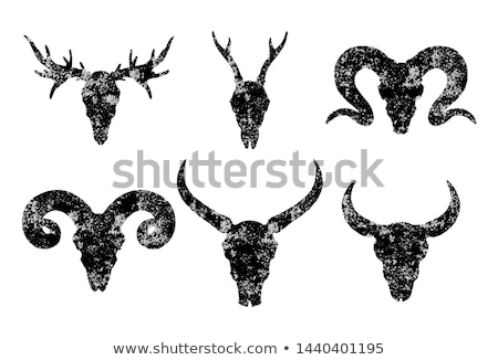 оленей доллар череп белый изолированный Сток-фото © taviphoto