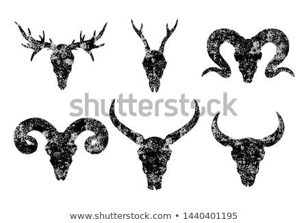 roe deer buck cranium on white background Stock photo © taviphoto