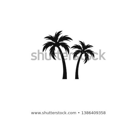 черный · вектора · пальма · логотип · силуэта - Сток-фото © blumer1979
