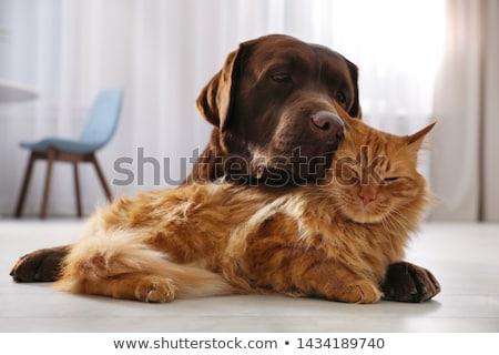 Chat chien amitié cute cartoon Photo stock © zsooofija