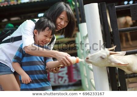Aranyos kicsi fiú anya etetés kecske Stock fotó © galitskaya