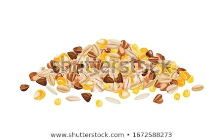 Hámozott kukorica izolált vektor ikon rajz Stock fotó © robuart