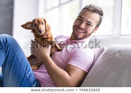 jamnik · psa · sofa · biały · brązowy · ssak - zdjęcia stock © lopolo