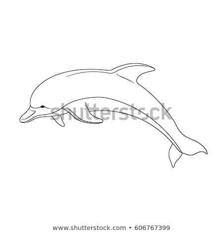 Hayvan yunus örnek doğa arka plan Stok fotoğraf © colematt
