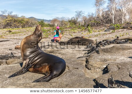 galapagos sea lion and wildlife nature photographer tourist on galapagos islands stock photo © maridav