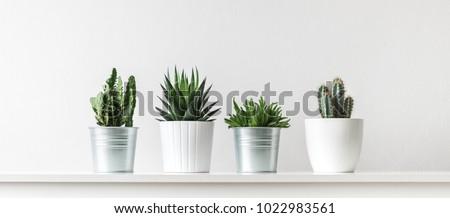 コレクション ジューシーな 植物 平和 ユリ ストックフォト © Melnyk