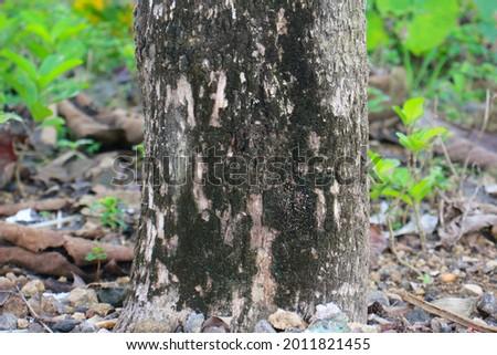 olive tree trunk 21 stock photo © lianem