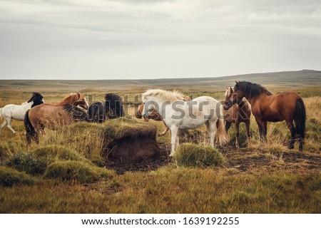 caballos · paisaje · azul · cielo · primavera · hierba - foto stock © kb-photodesign
