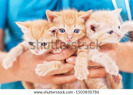 Three cute ginger tabby kittens in veterinary professional hands Stock photo © ilona75