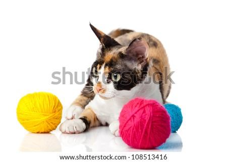 kat · witte · kitten · achtergrond · leuk - stockfoto © EwaStudio