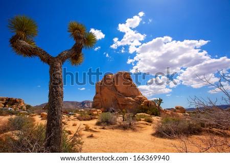Ağaç park vadi çöl Kaliforniya ABD Stok fotoğraf © lunamarina