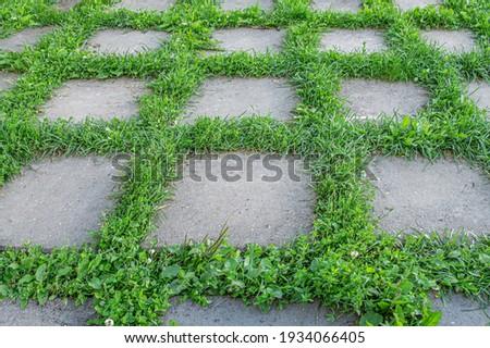 öreg csempék járda növények izületek háttér Stock fotó © meinzahn