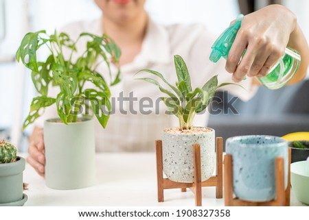 happy asian woman spraying houseplant at home Stock photo © dolgachov