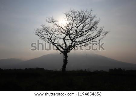 Drzewo niebo charakter wiosną streszczenie lata Zdjęcia stock © sweetcrisis