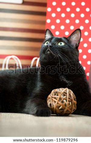 Retrato gato preto animal de estimação vermelho compras papel Foto stock © HASLOO