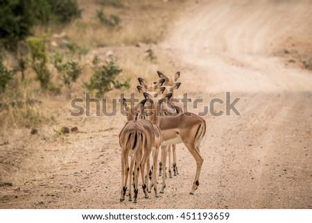 группа женщины за дороги парка ЮАР Сток-фото © simoneeman