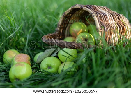 red healthy organic apples in basket on green grass in garden harvest stock photo © yelenayemchuk