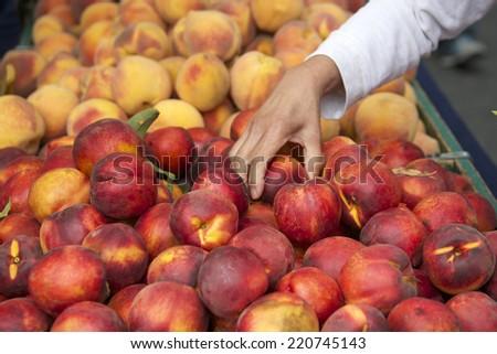 szőlőszüret · őszibarackok · érett · fa · nyár - stock fotó © mythja