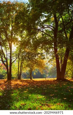Golden autumn fall October in famous Munich relax place - Englishgarten. Munchen, Bavaria, Germany Stock photo © dmitry_rukhlenko