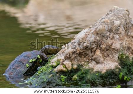Víz kint Malaga Spanyolország élet kagyló Stock fotó © amok