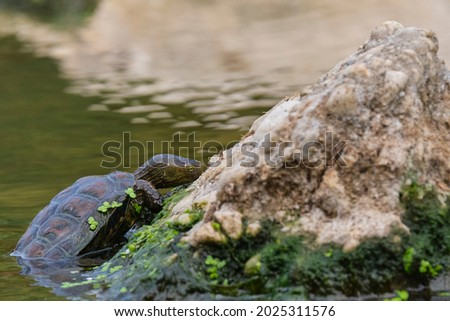 воды улице малага Испания жизни оболочки Сток-фото © amok