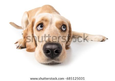 Zdjęcia stock: Psa · patrząc · strona · biały