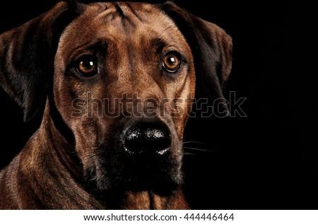 Belo escuro foto estúdio olho feliz Foto stock © vauvau