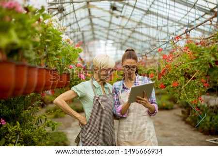 Supérieurs jeunes modernes fleuriste femmes regarder Photo stock © boggy