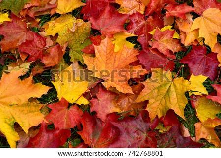 ősz · juhar · levelek · ösvény · színes · föld - stock fotó © smuki