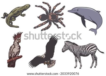 クモ 猿 漫画 レトロな 図面 スタイル ストックフォト © patrimonio