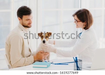 Veterinary concept. Cute jack russel terrier poses at vet office, being examined by professional vet Stock photo © vkstudio