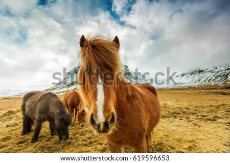 fajta · lovak · tájkép · kék · ég · tavasz · fű - stock fotó © kb-photodesign