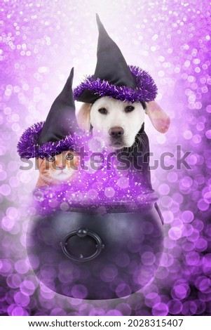 Cat wearing witch hat and poison pot with bubbles Stock photo © amaomam