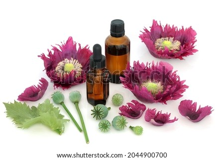 Poppy pods with extract in a bottle Stock photo © bdspn