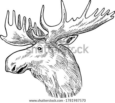 Head of a Bull Moose or Elk Alces Alces Scratchboard Retro Black and White Stock photo © patrimonio