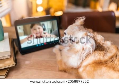 számítógép · portré · aranyos · fajtiszta · fehér · kutya - stock fotó © stuartmiles