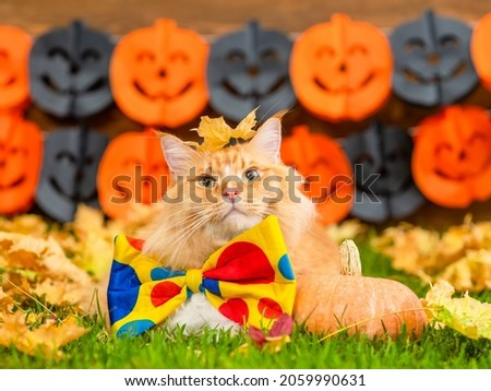 Cat wearing hat and bow tie with pumpkins and leaves Stock photo © amaomam