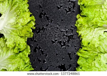 verde · orgânico · alface · salada · folhas · preto - foto stock © marylooo