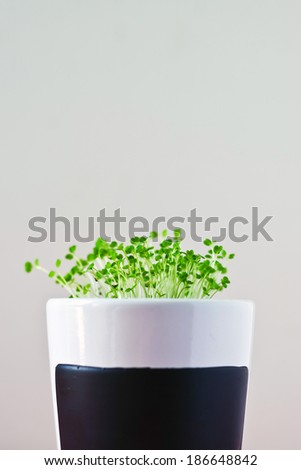 crescente · curto · foco - foto stock © stevanovicigor