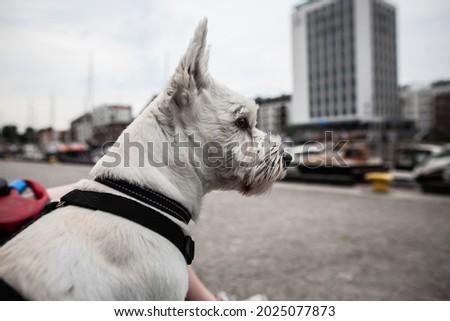 セーリング · ボート · マリーナ · 犬 · 青 · 船 - ストックフォト © trala