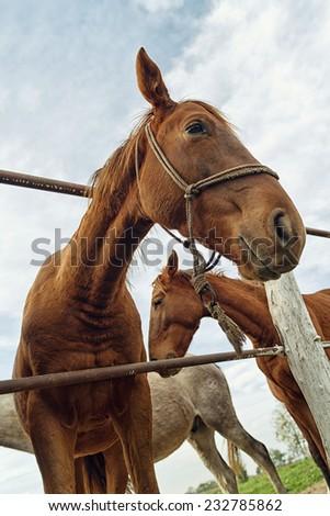 Vicces portré barna kanca ló felhős Stock fotó © stevanovicigor