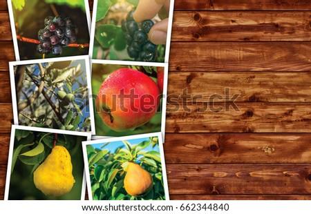 Organique fruits production photo collage espace de copie Photo stock © stevanovicigor