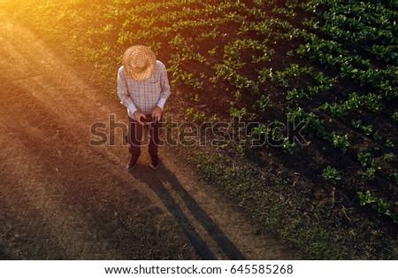 Farmer using drone in sugar beet crop field Stock photo © stevanovicigor