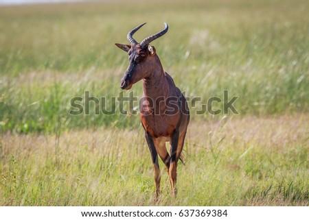 Néz kamera park természet utazás Afrika Stock fotó © simoneeman