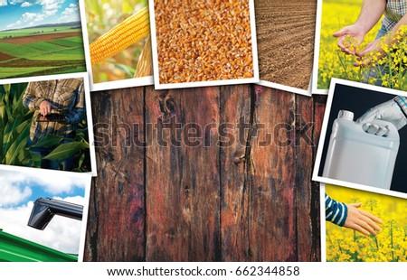 Mezőgazdaság fotó kollázs copy space fából készült tájkép Stock fotó © stevanovicigor